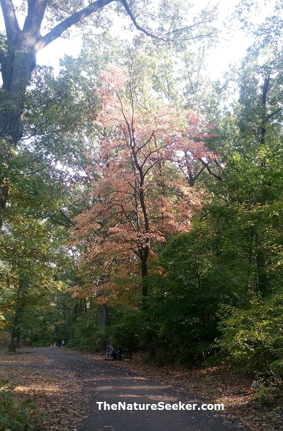clove lakes park autumn fall colors