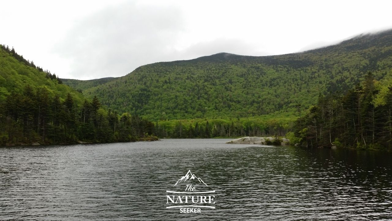 beaver pond in the white mountains NH