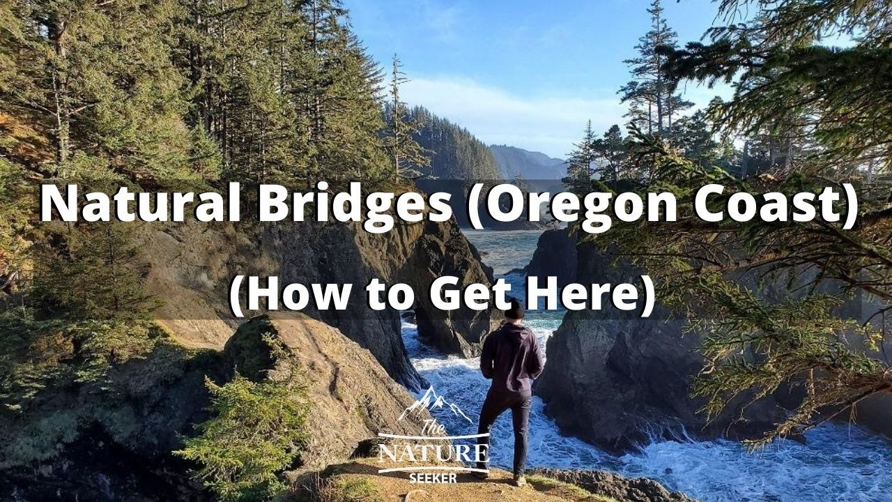 how to find natural bridges on the oregon coast