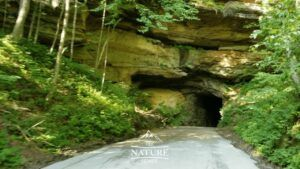 scenic drives at red river gorge daniel boone national forest