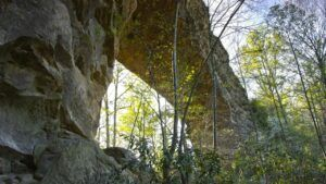 skybridge picture daniel boone national forest