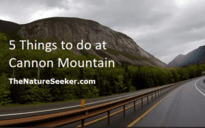 5 things to do at cannon mountain