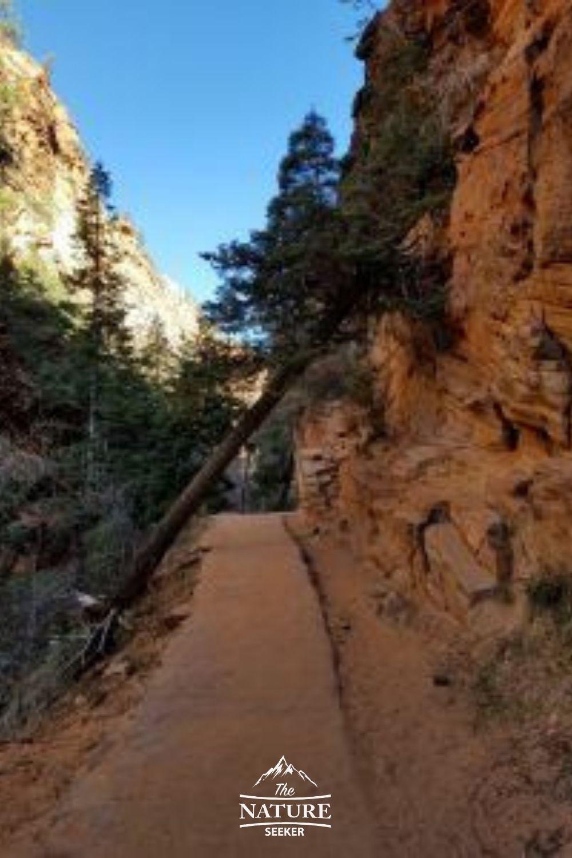 beautiful hike through canyon before angels landing