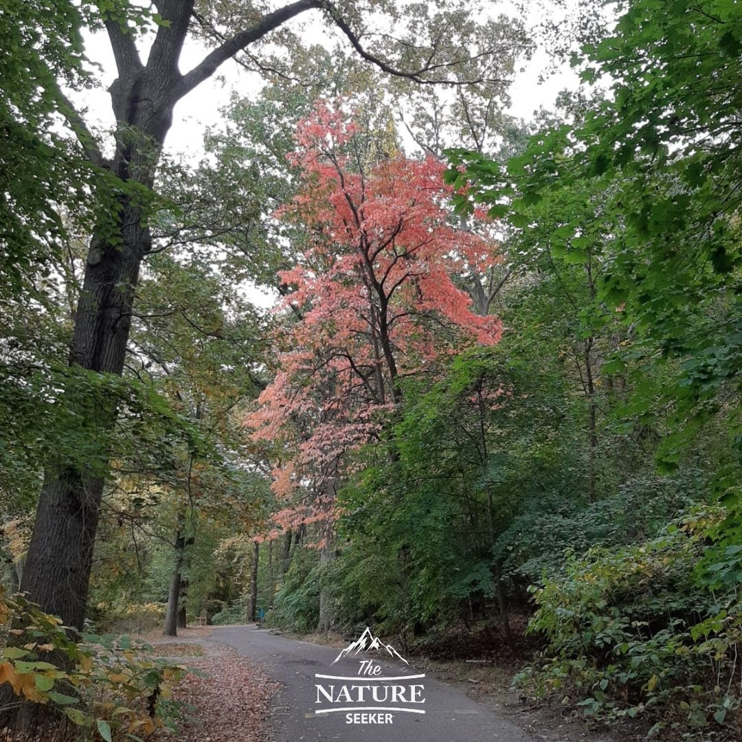 fall at clove lakes park staten island