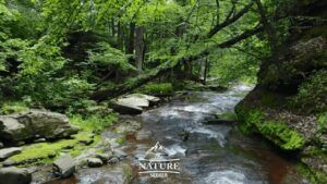 hiking trail down kaaterskill river in the catskill mountains