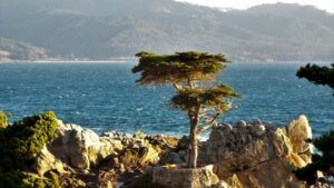 see 17 mile drive and pebble beach at big sur