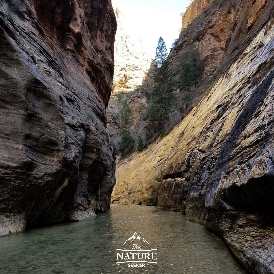 the famous narrows hike of zion national park 04