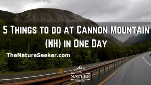 things to do at cannon mountain NH