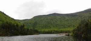 white mountains beaver pond photo