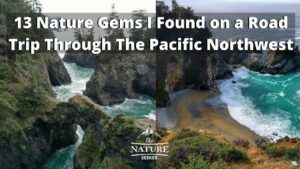 13 nature gems I found on my first road trip through the pacific northwest