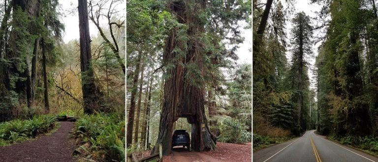 my redwoods trip