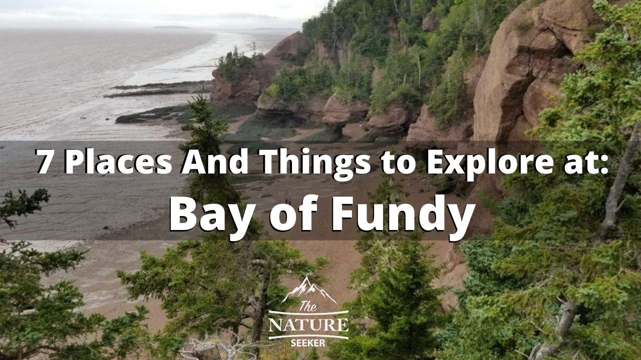 Things to See And do at Bay of Fundy