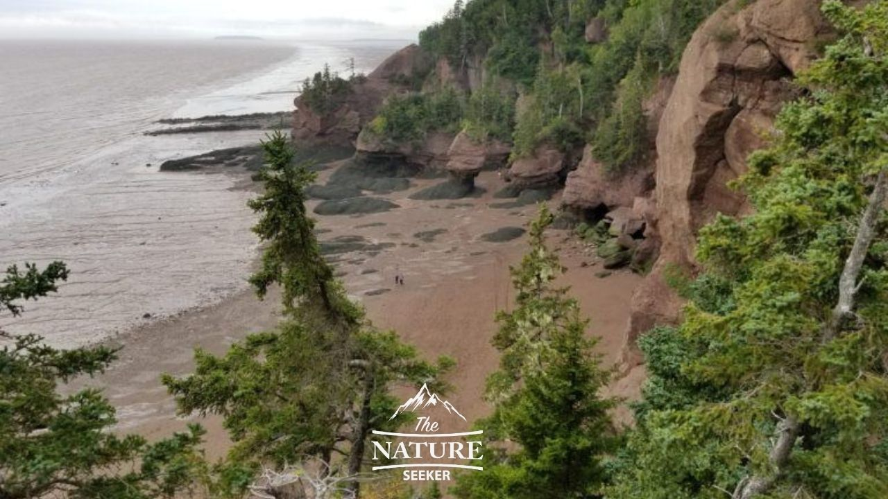 bay of fundy hopewell rocks viewing area 07