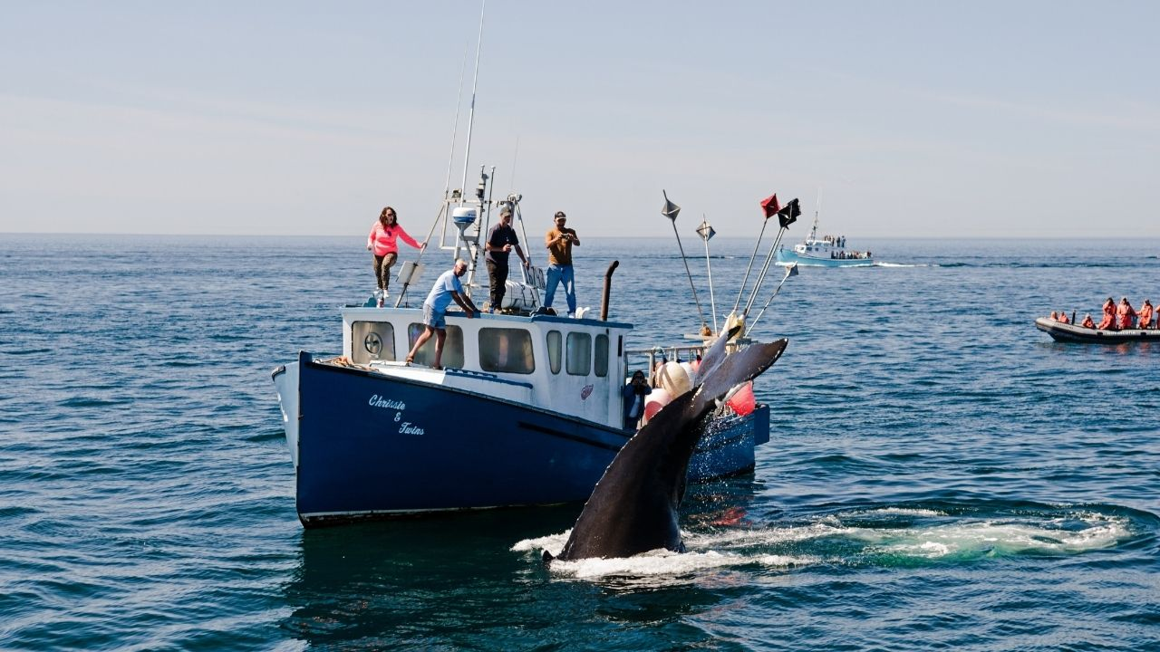 bay of fundy whale watching tours 08
