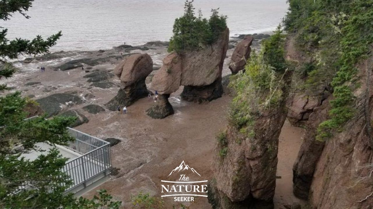 hopewell rocks bay of fundy near appalachian trail 01