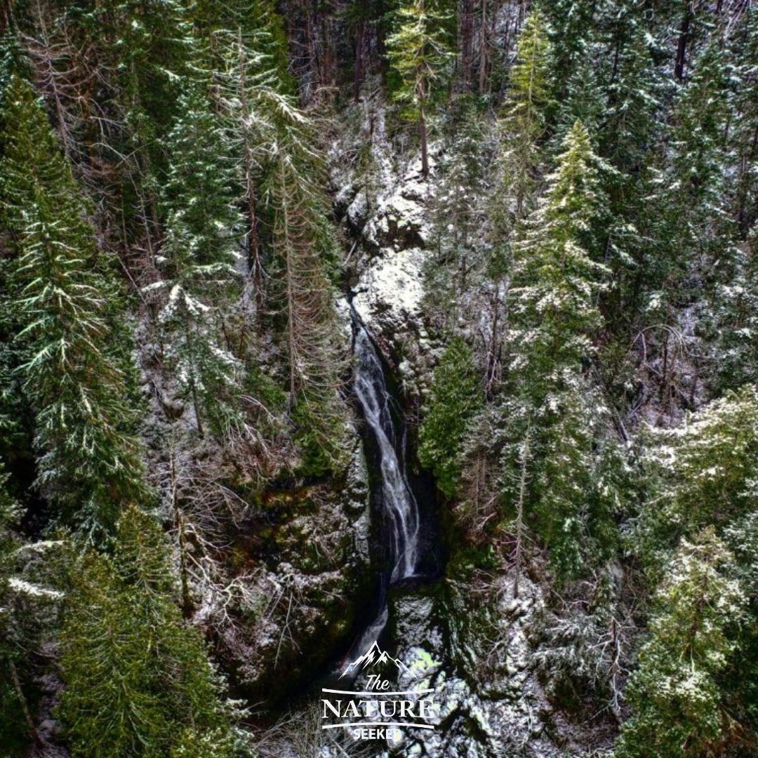 waterfall by high steel bridge in olympic national forest 01