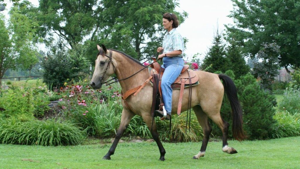 horseback riding at mohonk preserve