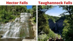 things to see close to watkins glen state park