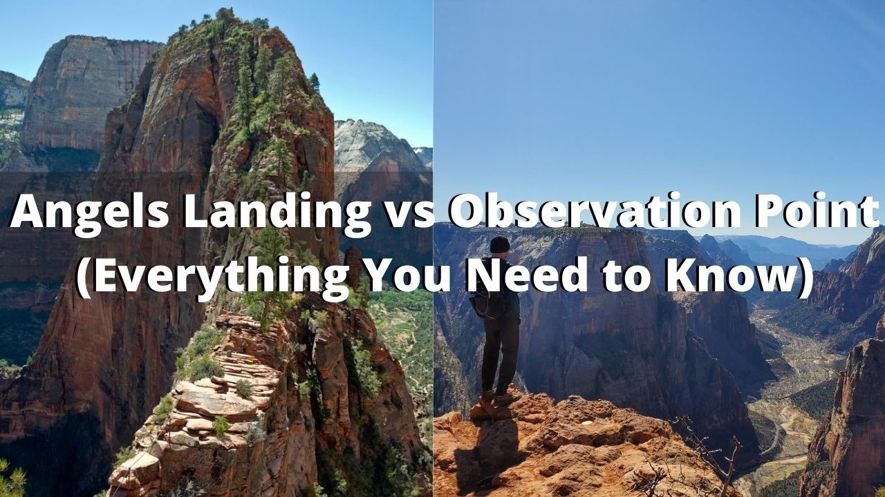 Angels Landing Vs Observation Point. Which Trail is Better?