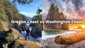 Oregon coast vs washington coast