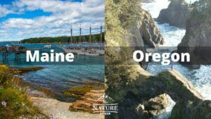 maine coast oregon coast comparison 1