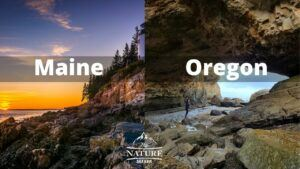 maine coast vs oregon coast comparison 4