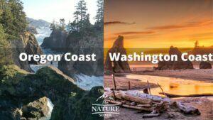 oregon coast vs washington coast 1
