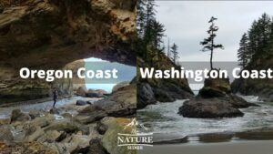 oregon coast vs washington coast 3