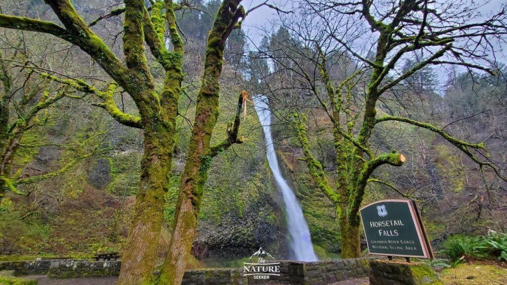 horsetail falls columbia river gorge