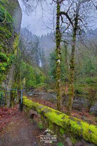 beautiful columbia river gorge