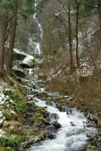 Wakheena Falls at columbia river gorge photo