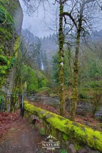 spring bloom at columbia river gorge photo