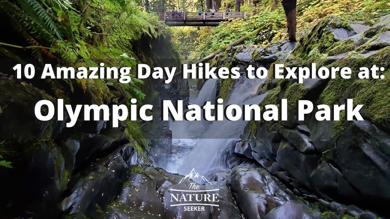 best day hikes olympic national park