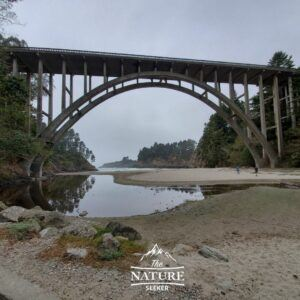 russian gulch state park bridge and trail