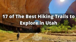 17 of The Best Hiking Trails to Explore in Utah
