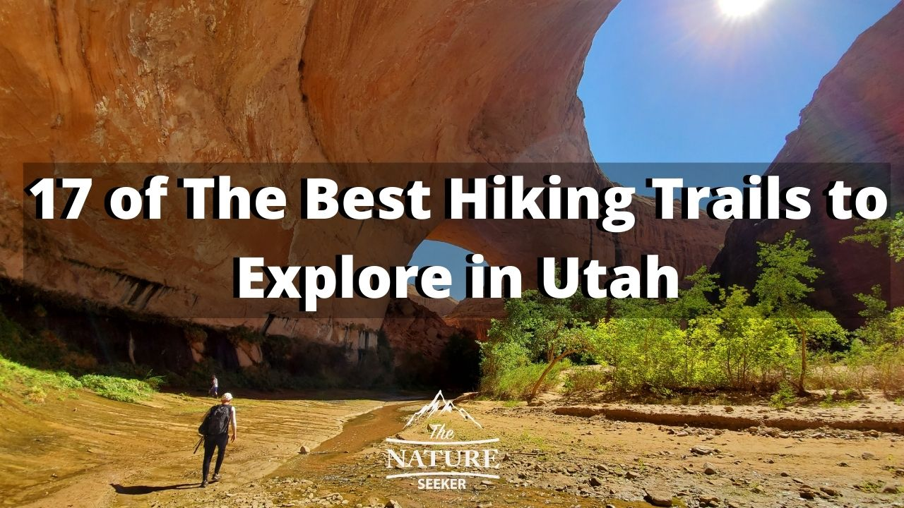Best Hiking Trails in Utah