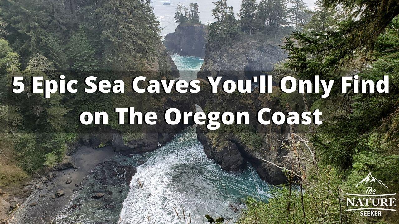 sea caves on the oregon coast