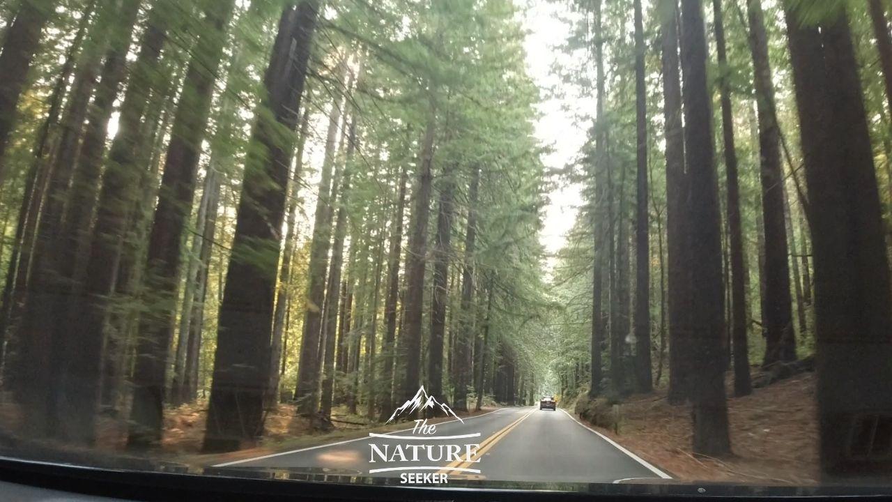 hendy woods state park scenic drive california