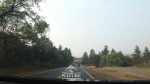 northern california scenic drive 128 through vineyards