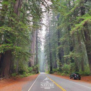 prairie creek redwoods park scenic drive