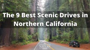 The 9 Best Scenic Drives in Northern California