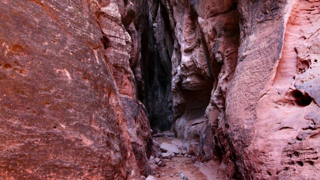jenny's canyon trail hike in st. george utah
