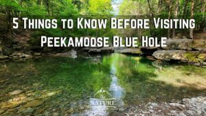 5 Things to Know Before Going to Peekamoose Blue Hole