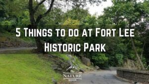5 Things to do at Fort Lee Historic Park in One Day