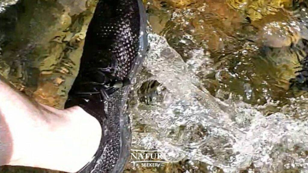 testing the zhuanglin water shoes