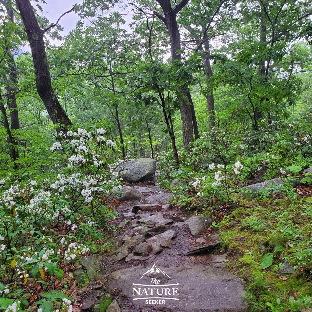 bull hill short loop yellow trail run area