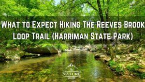 Reeves Brook Loop Trail. 5 Things to Know Before Hiking Here