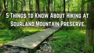 5 Things to Know Before Hiking Sourland Mountain Preserve