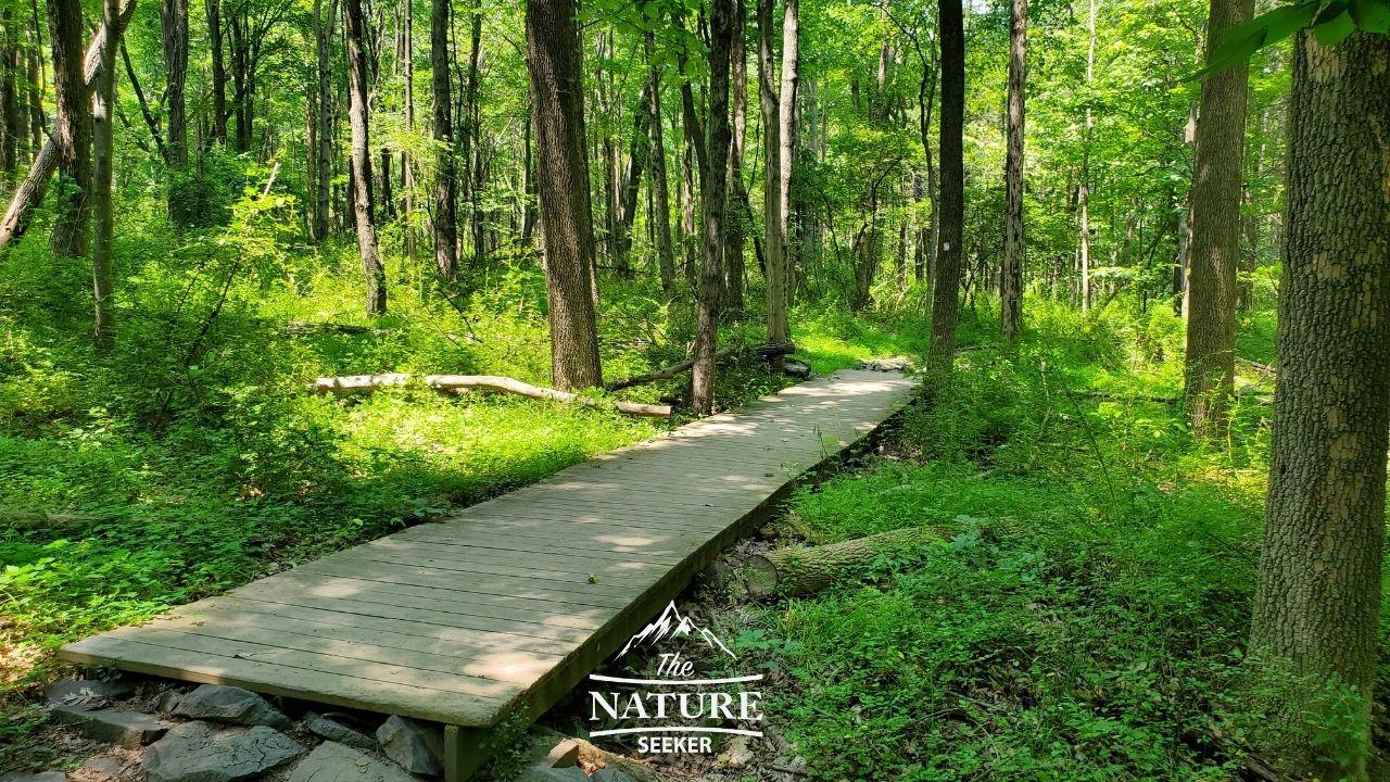 sourland mountain preserve white trail image