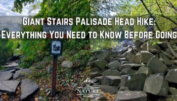 The Giant Stairs Palisades Hike: Everything You Need to Know